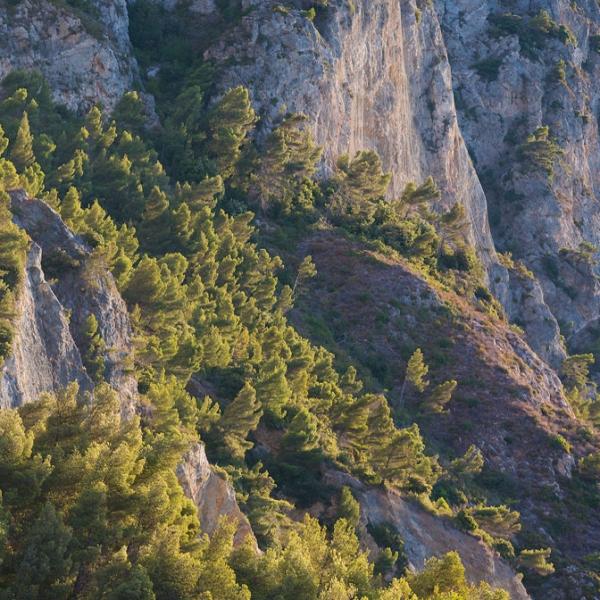 PN10-2012-CAPO-NOLI-PINI-D-ALEPPO FOTOSTUDIOLOVISOLO